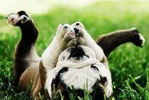 puppies / by Michelle Janzen