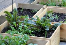 Garden ideas