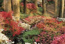 Southern Spring Gardens