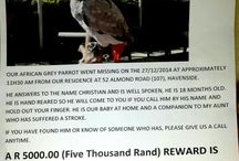 Lost and found birds / South Africa