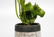 Plants / by Hiromi Furukawa
