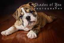 Photo Inspiration: Pets / by Danielle Neil Photography