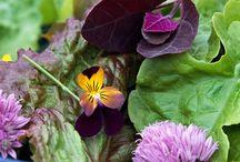 CAKE: Edible Flowers / by Frances Galvez