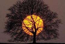 Nature. / Tree moon.