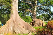 Trees from Puerto Rico /Arboles de Puerto Rico