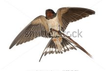 Tattoo Ideas / looking for idea of a Swallow Tattoo