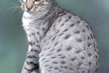 Cats ♡♡♡