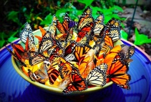 Butterflys / by Cindy Moore Neben