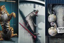 Animal Rights / by Сергей Чибураев