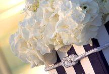 Matrimonio nautico
