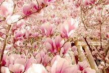 çiçekler:)
