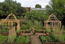 soft fruit garden