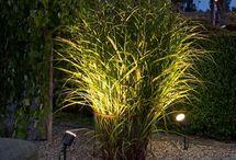Belysning trädgården