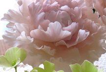flores en pasta de goma