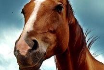 horse tips / by joel