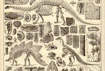 animal vintage prints