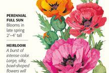 Botanical Interests - Poppy