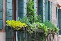 balcony garden/balkonowe ogródki