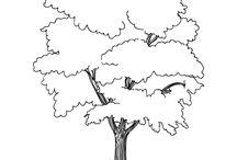 σχεδια δέντρων