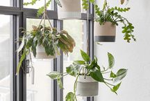 Hanging/ indoor plants