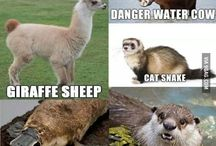Funny animal names