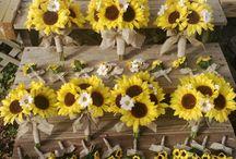 floarea soarelui - sunflower