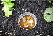 Gardening tips / Home gardening tips