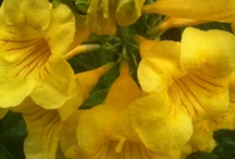 My Secret Garden / ..a stroll thru my garden... / by Sylvia Lewis