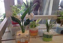 ヌボー生花店 長野南バイパス店 / 『ウキウキHappy♡ 愉快で楽しいお店 ♡♡ Lieto.P+』をコンセプトに展開しております。 店内には「長野ではここにしかない!」珍しい鉢や苗・切り花がお出迎え。