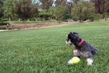 Pet-Friendly Inn / by Ojai Resort