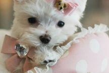 beautiful sweet dogs