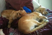 Marvelous Mutts / Celebrate National #Mutt Day with us!