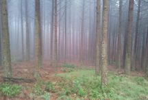 Forest / On route while cycling.