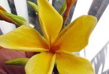 süthető gyurma virágok