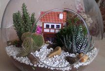 Cam  Fanus Kaktus / Yeni Hobim.Kendi çalışmam