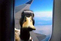 Ente / Für die lustigsten Enten!