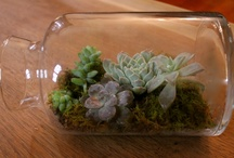 container garden / by Kellee Nelson