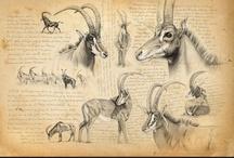 zwierzęta z rogami.