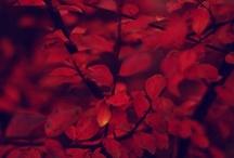 красное