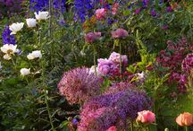 Gardens - Herbaceous Borders