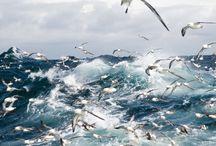 sea:gulls