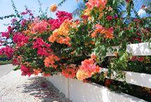 Gorgeous Flora / Flowers, trees, landscapes