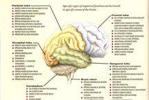 OT - Cognition