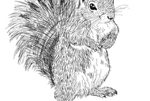 scoiattiloli