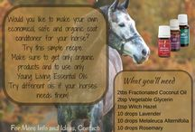 Horse Super Ideas
