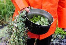 wilde eetbare planten