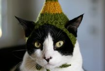critters with knitted hats / by Jen Davidson