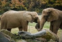 NC Animals / Our state is home to an abundance of native (and not so native) animals! Check out some of the creatures that call North Carolina home, both in the wild and at our zoo!  / by N.C. Department of Cultural Resources
