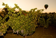 Wine / #wine vines bottles grapes. / by Terry Lozoff