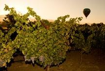 Wine / #wine vines bottles grapes.
